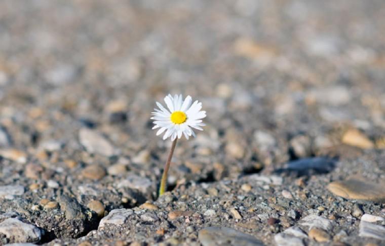 אי פריון נשים – יומן החלמה פריון י. מ. שם בדוי